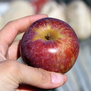 Heirloom apple - Blue Pearmain