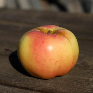 Heirloom apple - Calville Blanc d'Hiver